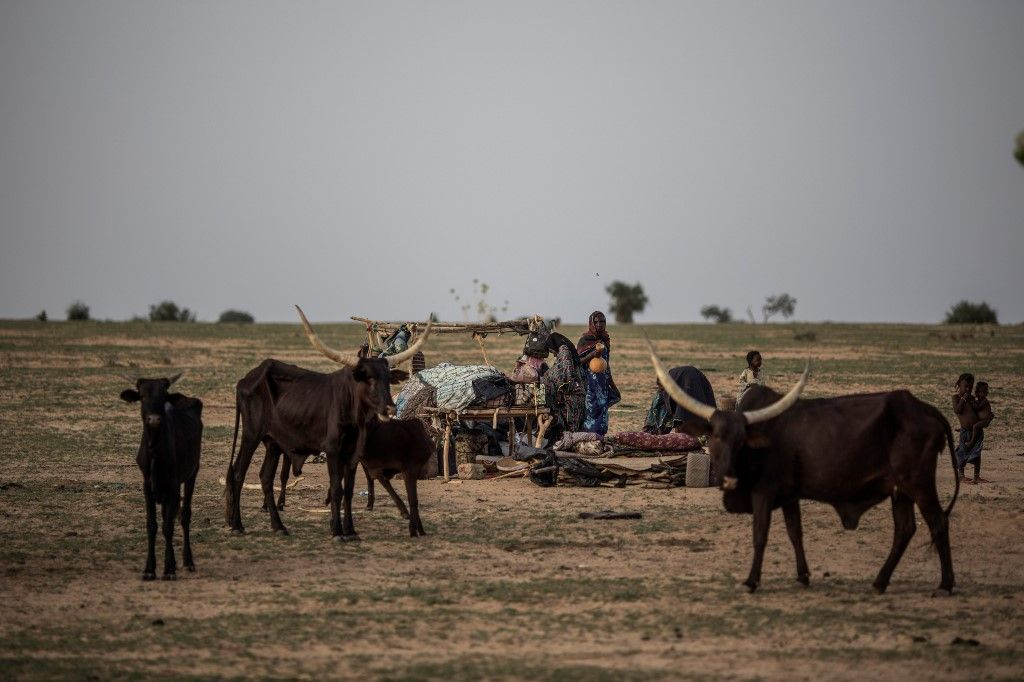 Members of the Sabgari Clan, gather to prepare the morning meal at their camp in Bermo on June 25, 2019. The Wodaabe People, a sub-group of the Fulani, are nomadic cattle herders and traders in the wider Sahel region. Their migrations stretch from southern Niger, through northern Nigeria, northeastern Cameroon, southwestern Chad, and the western region of the Central African Republic. - Higher temperatures, shifting winds and moisture levels that alter rainfall patterns, sandstorms, torrential rain -- all can change the quality or even the location of pasture on which migrating herders depend. This year, for the Fulani, has been relatively good. The herdsman were able to draw on stocks of animal feed to help them survive stress points, while timely rainfall on some areas of the migration trail helped tender young grass to grow. But whether this respite endures is the big question. (Photo by Marco LONGARI / AFP)