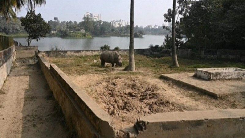 حديقة حيوانات في بنغلادش تبحث عن رفيق لأنثى وحيد قرن تشعر بالوحدة