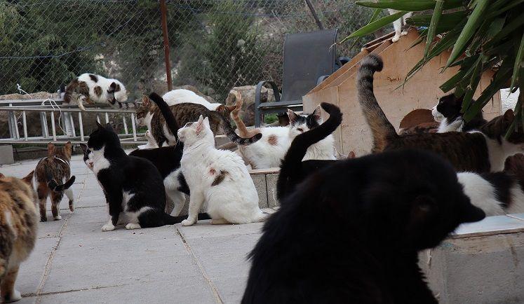 جائحة كورونا تتسبب في انتشار كبير للقطط بشوارع قبرص