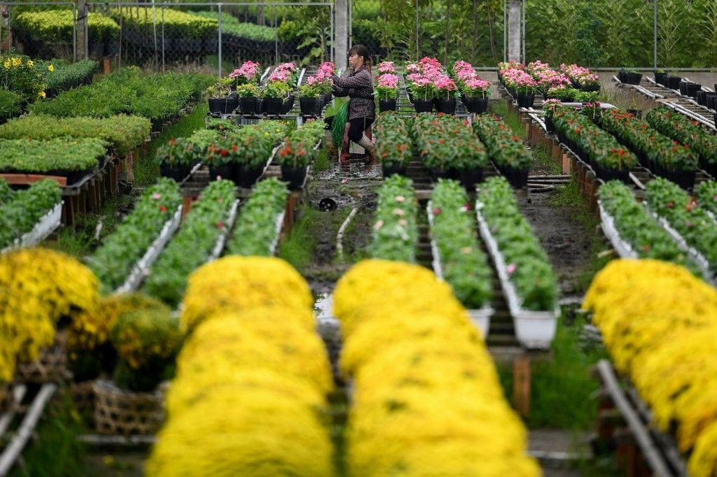 قرية الزهور في فيتنام..أكثر من 1500 نوع من الورود وأشجار الزينة للبيع