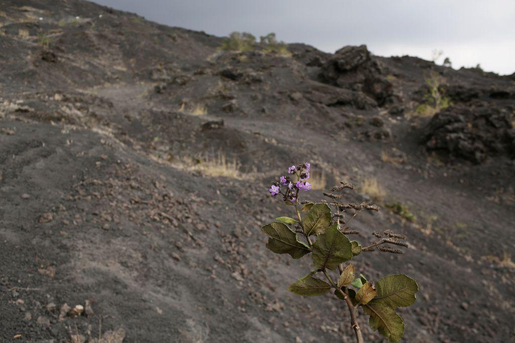ثوران بركان باكايا في غواتيمالا وانتشار الدخان والرماد