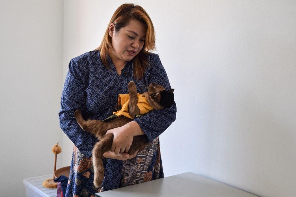 تزيين قطط ماليزيا في المناسبات