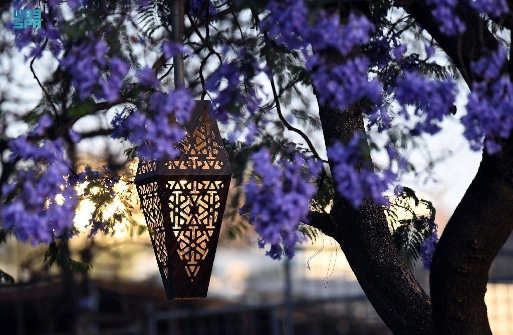 """بالصور ربيع """"الجاكرندا"""" يجذب الزوار لمدينة أبها السعودية"""