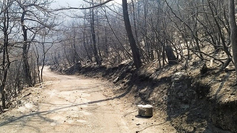 لبنان.. حرائق غابات الشمال متواصلة والسكان يطلبون النجدة