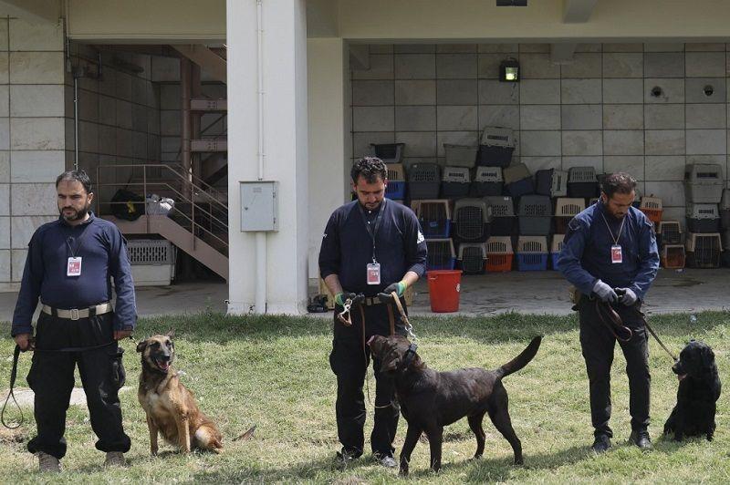 الكلاب المتروكة في مطار كابول بعد الانسحاب الأمريكي جاهزة للعودة للعمل