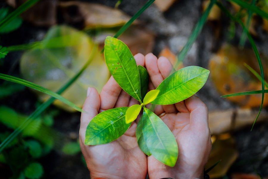 نبات بيد انسان