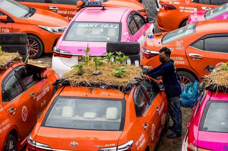 سيارات التاكسي في بانكوك تتحول إلى بساتين في غياب الزبائن