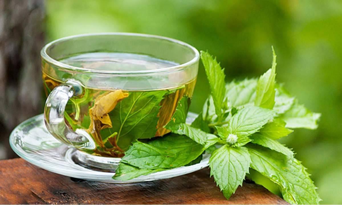 شاي النعناع العلاج السحري لمرض القولون العصبي